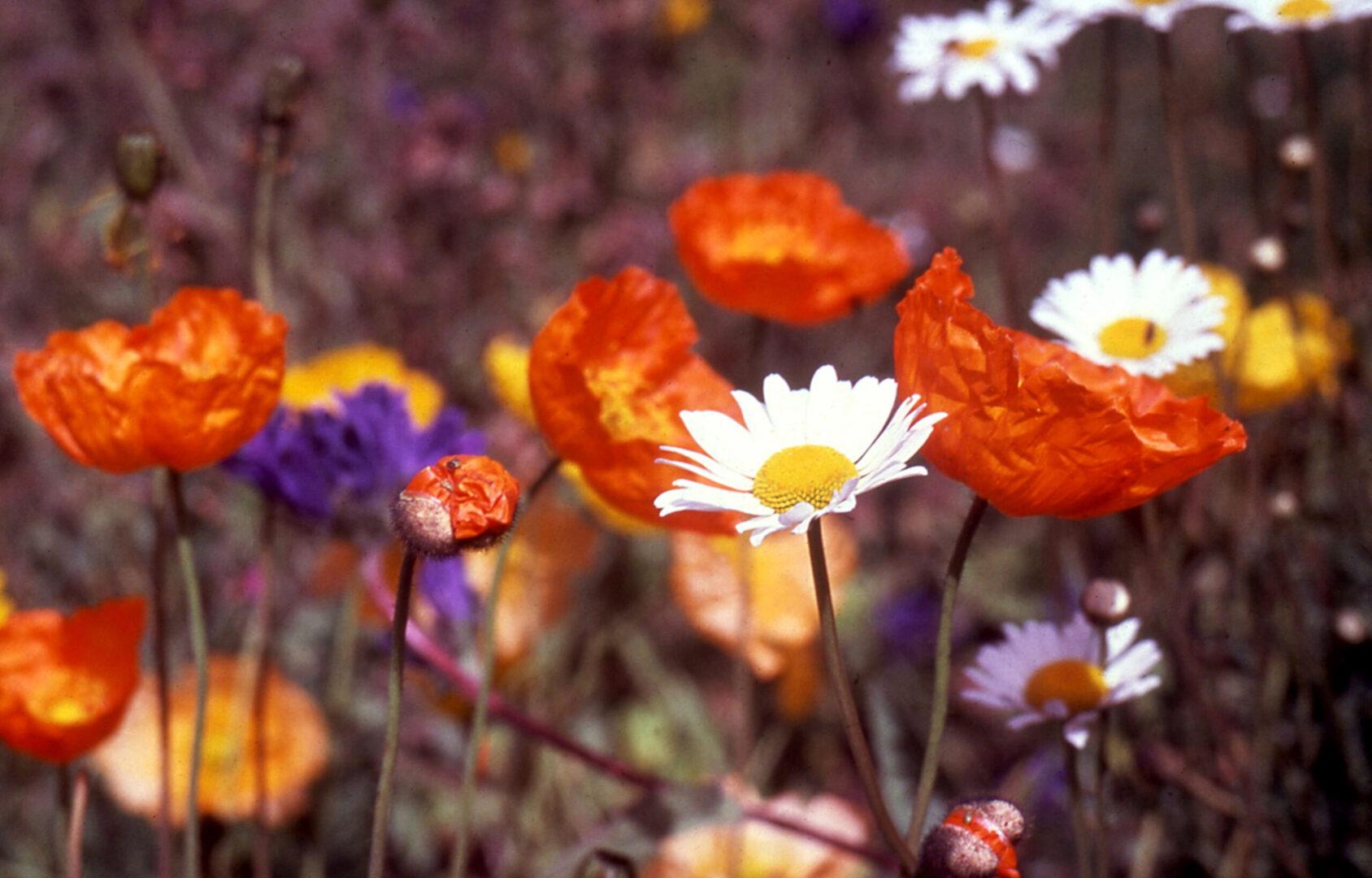 Banff Flowers