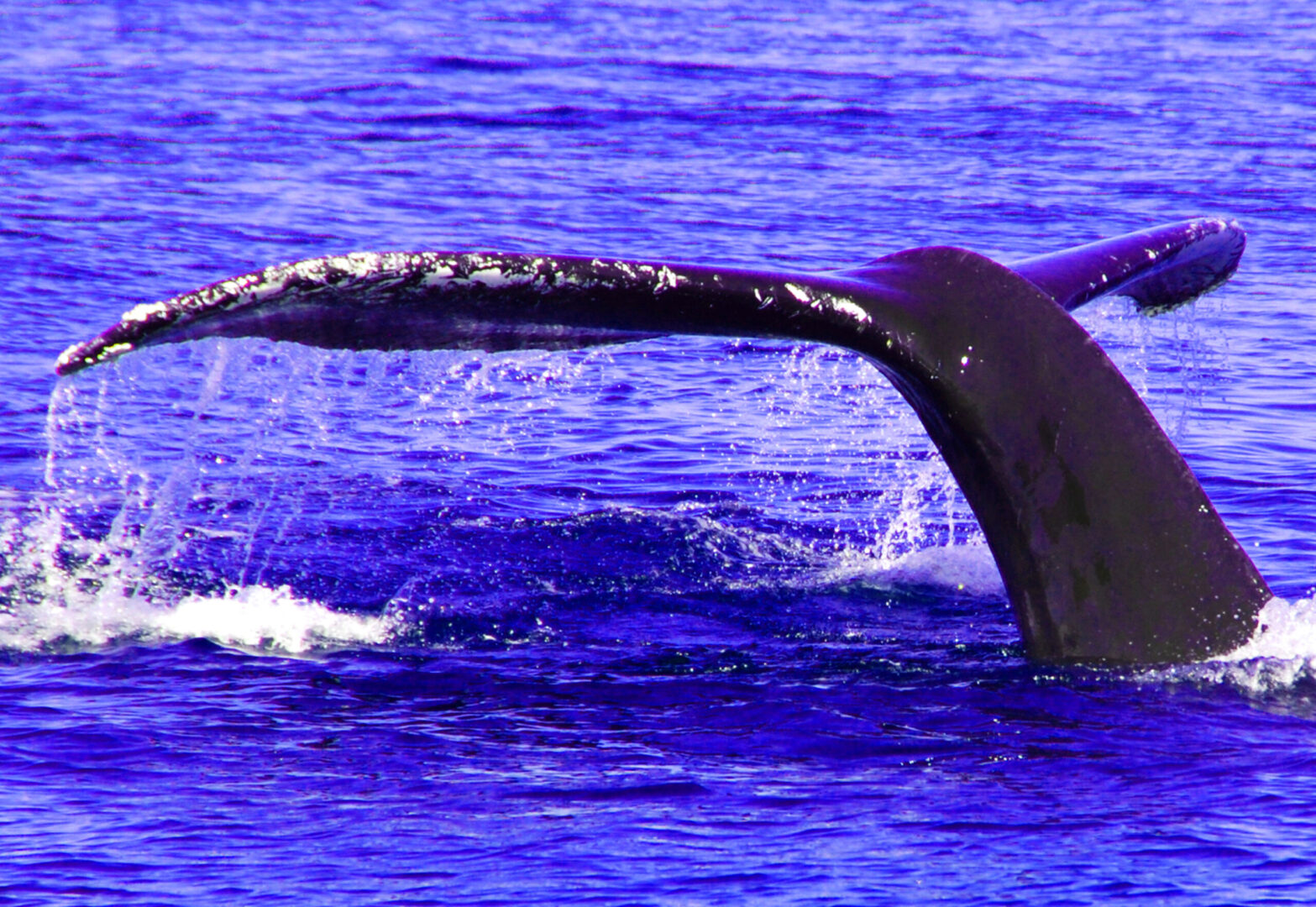 Whale of a Tail