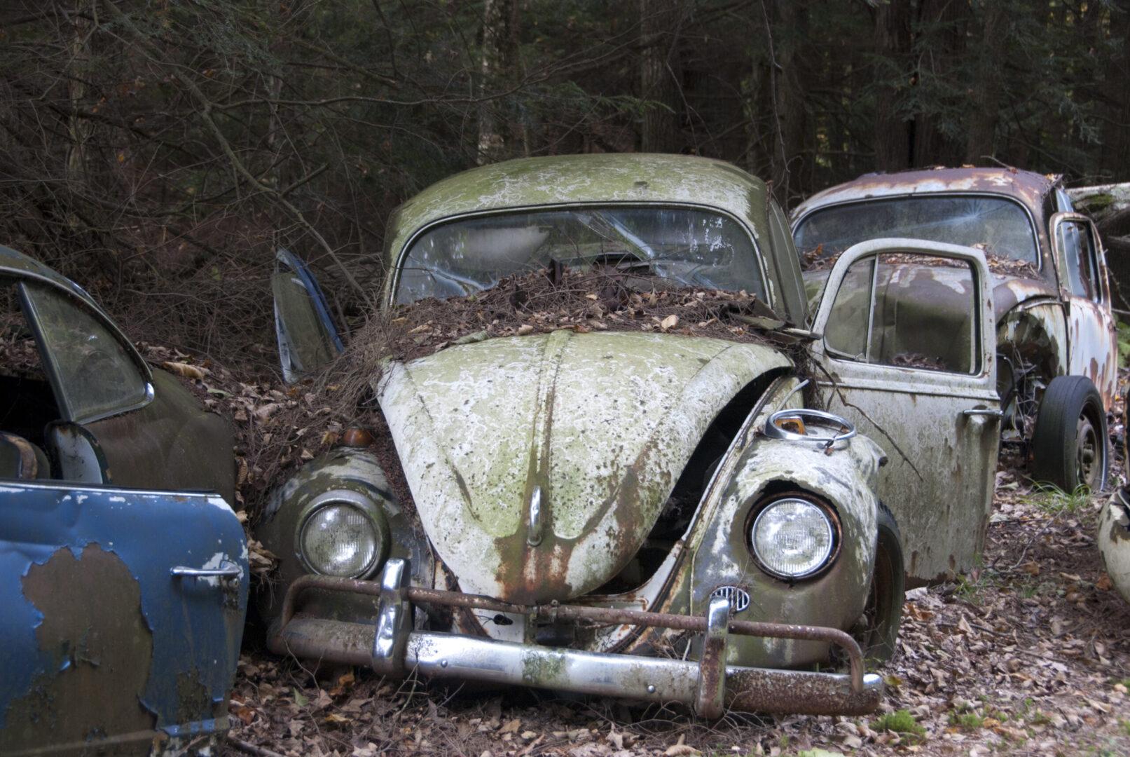 Rust vs. Bug